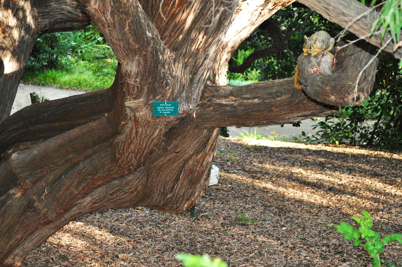 growingontheedge.net - View topic - Visit to (and Pics of) UCLA ...