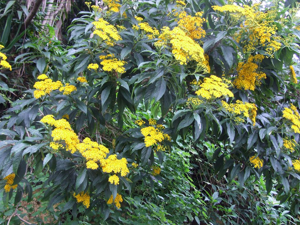 Yellow blooming shrubs images frompo 1 - Blooming shrubs ...